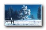 孤独的长椅 宽屏壁纸