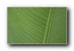 Linux Mint 15 Olivia 壁纸