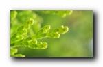 绿色清新大自然健康护眼宽屏壁纸(三)