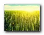秋天的草原(多分辨率)