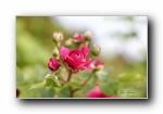 《美丽花朵》朦胧微距摄影宽屏壁纸