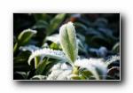 《四季流转 花开依旧》花蕾植物微距摄影宽屏壁纸