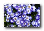 《大自然的恩惠》花蕾花瓣宽屏壁纸