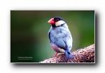 五彩缤纷的鸟儿 宽屏壁纸