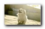 《生来美好》可爱汪星人狗狗宽屏壁纸