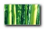 《唯美2013》精选风光风景植物动物宽屏壁纸