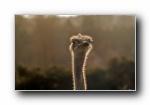 《Fauna》野生动物宽屏壁纸
