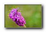 秘密花园第三辑:花,昆虫 摄影宽屏壁纸