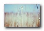 Retina高清风光风景艺术设计宽屏壁纸(第二辑)