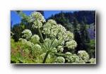 美国雷尼尔山 大自然风光风景宽屏壁纸