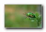 昆虫:蜻蜓,蝴蝶,瓢虫 宽屏壁纸