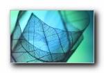 孤叶脉络摄影宽屏壁纸(Shihya Kowatari)