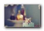 小白鼠可���屏壁�