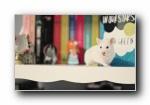 小白鼠可爱宽屏壁纸