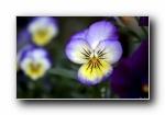 《大自然的恩惠二》花蕾花瓣��屏壁�