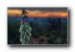 《大自然的恩惠二》花蕾花瓣宽屏壁纸
