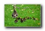 《Fauna》野生动物宽屏壁纸(第二辑)