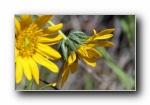 《春暖花开》花蕾花瓣摄影宽屏壁纸