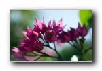 《大自然的恩惠三》花蕾花瓣宽屏壁纸