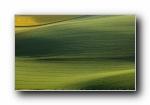 护眼绿油油的大草原宽屏壁纸