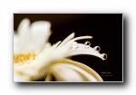 《流�拥��石》花瓣上的水珠水滴�z影��屏壁�(第二�)