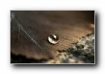 《流动的宝石》花瓣上的水珠水滴摄影宽屏壁纸(第二辑)