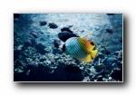 热带鱼(多分辨率)