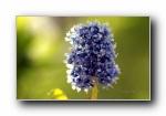《春暖花�_》第二� 花蕾花瓣�z影��屏壁�