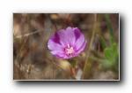 《春暖花开》第二辑 花蕾花瓣摄影宽屏壁纸
