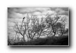 枯藤老树上的昏鸦