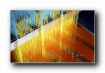 2014年 Bing官方主题第十二波 宽屏壁纸