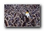 2014年 Bing官方主题第十一波 宽屏壁纸