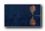 2015年 Bing官方主题第二波 宽屏壁纸