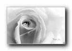 花之几何 黑白摄影微距花植物宽屏壁纸