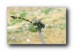 昆虫:蜻蜓,蝴蝶,瓢虫 宽屏壁纸(第三辑)