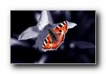 Elite Sweden 高清摄影植物动物风光风景宽屏壁纸