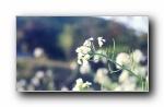 《唯美》第五辑 精选风光风景植物动物宽屏壁纸