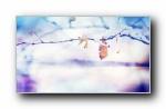 《唯美》第六辑 精选风光风景植物动物宽屏壁纸