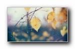 《唯美》第七辑 精选风光风景植物动物宽屏壁纸