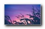 夏末秋初大自然风光风景摄影宽屏壁纸