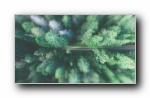 绿色淡雅风风格摄影美女风光风景宽屏壁纸