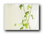 高精度室内盆栽摆设