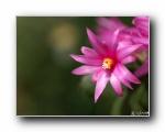 日本花卉影集(三)