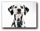 狗年看狗[第三辑] 小狗