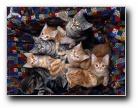动物壁纸Webshots