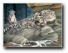 手绘动物壁纸