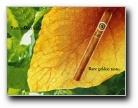 雪茄精美壁纸