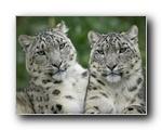 Webshots精美动物壁纸