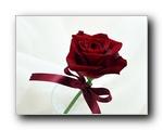 爱系列-爱的鲜花