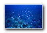 海底世界-鱼群上集
